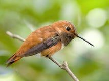 Oiseau sur la brindille Photographie stock libre de droits