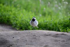 Oiseau sur la colline Image libre de droits