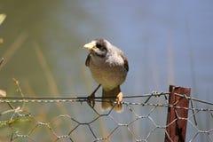 Oiseau sur la frontière de sécurité Photographie stock