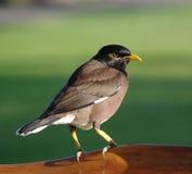 Oiseau sur la frontière de sécurité en bois photographie stock