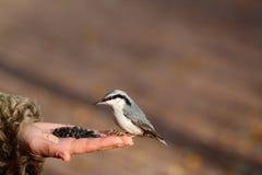 Oiseau sur la main photographie stock libre de droits