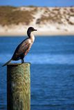 Oiseau sur la montre de tempête Image libre de droits