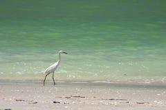 Oiseau sur la plage Image libre de droits