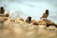 Oiseau sur la plage Photographie stock