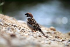 Oiseau sur la plage Photos libres de droits