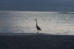 Oiseau sur la plage Photo stock