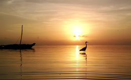 Oiseau sur la plage Images stock