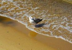 Oiseau sur la plage Images libres de droits