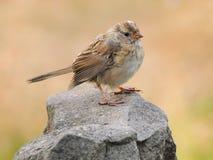 Oiseau sur la roche Photographie stock