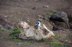 Oiseau sur la roche Image libre de droits