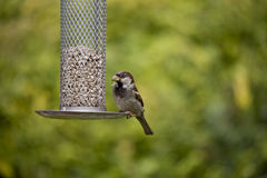 Oiseau sur le câble d'alimentation Photo libre de droits
