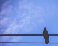 Oiseau sur le ciel bleu Photographie stock libre de droits