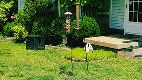 Oiseau sur le conducteur d'oiseau dans la cour Photographie stock libre de droits