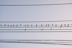 Oiseau sur le fil électrique Image stock