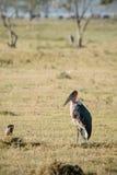 Oiseau sur le lac Photographie stock