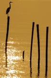 Oiseau sur le poteau Image libre de droits