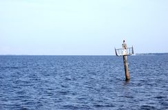 Oiseau sur le poteau de repère de bateau. Photographie stock libre de droits