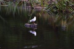 Oiseau sur le rondin Photographie stock