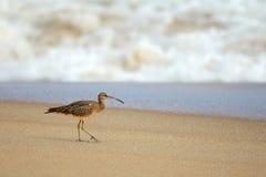 Oiseau sur le sable Photographie stock