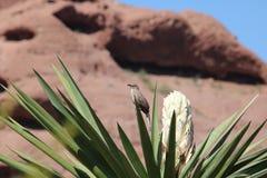 Oiseau sur le yucca Images libres de droits
