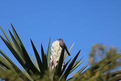 Oiseau sur le yucca Images stock