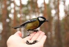 Oiseau sur ma main Photos stock