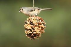 Oiseau sur Suet Feeder Photos libres de droits