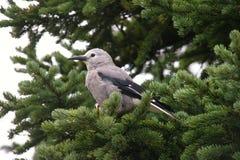 Oiseau sur un arbre Photographie stock