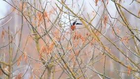 Oiseau sur un arbre banque de vidéos