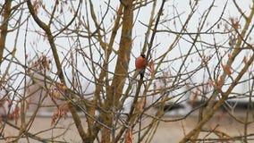 Oiseau sur un arbre clips vidéos