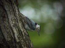Oiseau sur un arbre Photo libre de droits