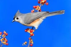 Oiseau sur un bâton Photographie stock