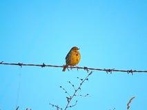 Oiseau sur un barbelé image libre de droits
