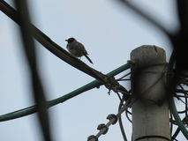 Oiseau sur un fench Photographie stock libre de droits