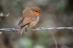 Oiseau sur un fil Image stock