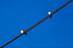 Oiseau sur un fil Photos stock