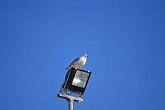 Oiseau sur un projecteur Image libre de droits