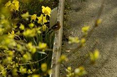 Oiseau sur une barrière photo stock