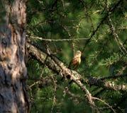 Oiseau sur une branche Image libre de droits