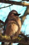 Oiseau sur une branche Images libres de droits