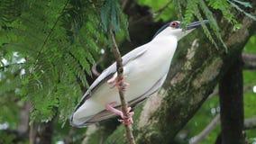 Oiseau sur une branche Photographie stock