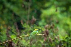 Oiseau sur une branche photographie stock libre de droits