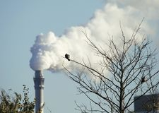 Oiseau sur une branche près d'une cheminée de tabagisme produisant des gaz à effet de serre photos stock
