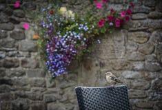 Oiseau sur une chaise Photographie stock libre de droits