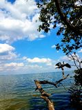 Oiseau sur une plage image libre de droits