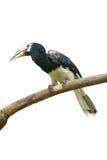 Oiseau tropical Photo stock
