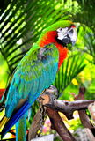Oiseau tropical Images stock