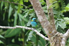 Oiseau tropical coloré Photos libres de droits