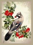Oiseau un geai sur une branche de cendre de montagne Images stock