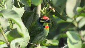 Oiseau vert Photos libres de droits